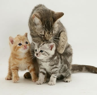 Mother-cat-with-kittens